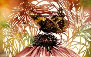 butterfly with coneflower
