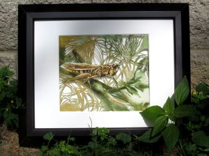 grasshopper framed