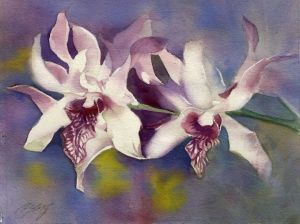 pink dendrbium orchid  9x11